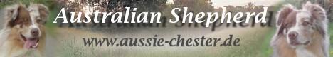 Australian Shepherd | Chester-Online